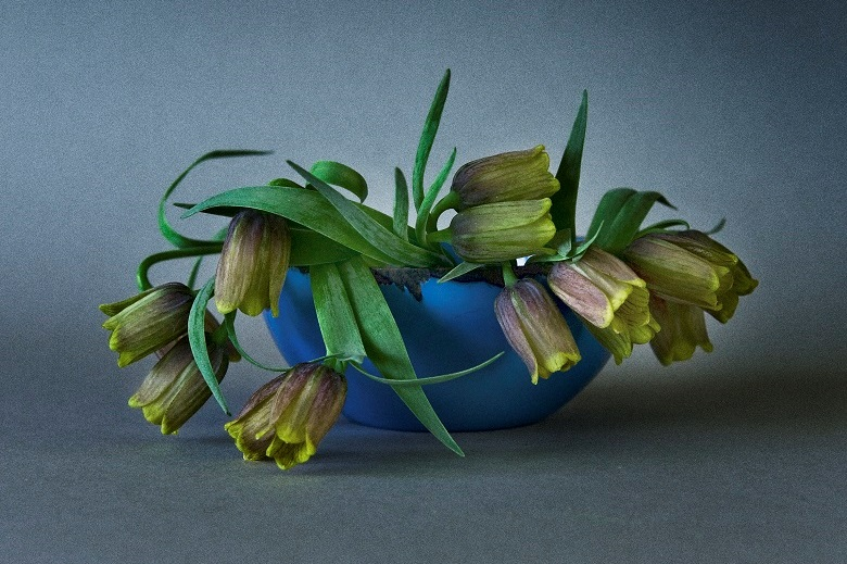 Bulb flowers as the subject of art