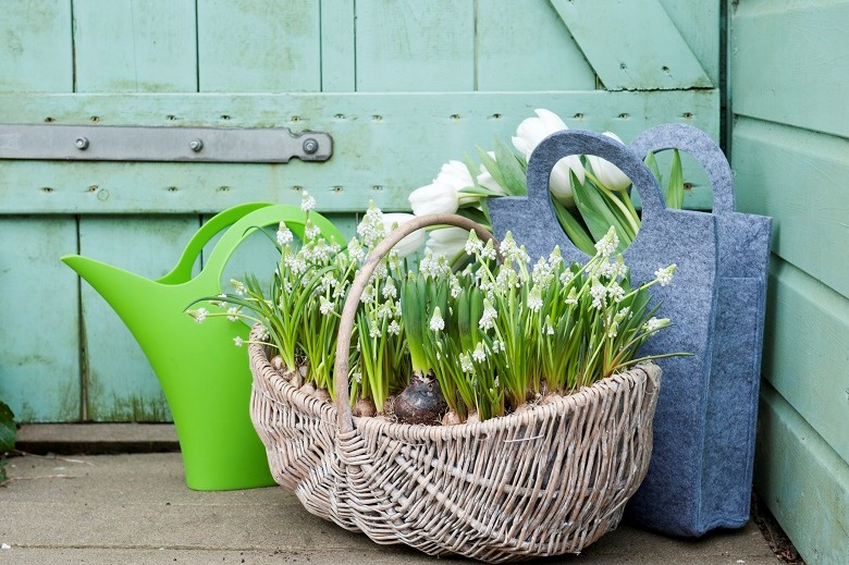Cheer up with potted bulbs