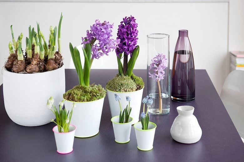 A do-it-yourself spring wit bulbs in pots and bulb flowers