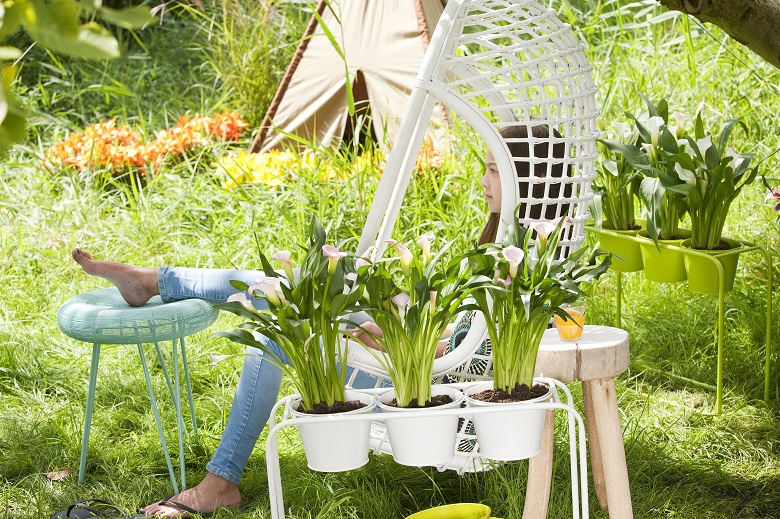 Ready-potted bulbs make a garden look welcoming